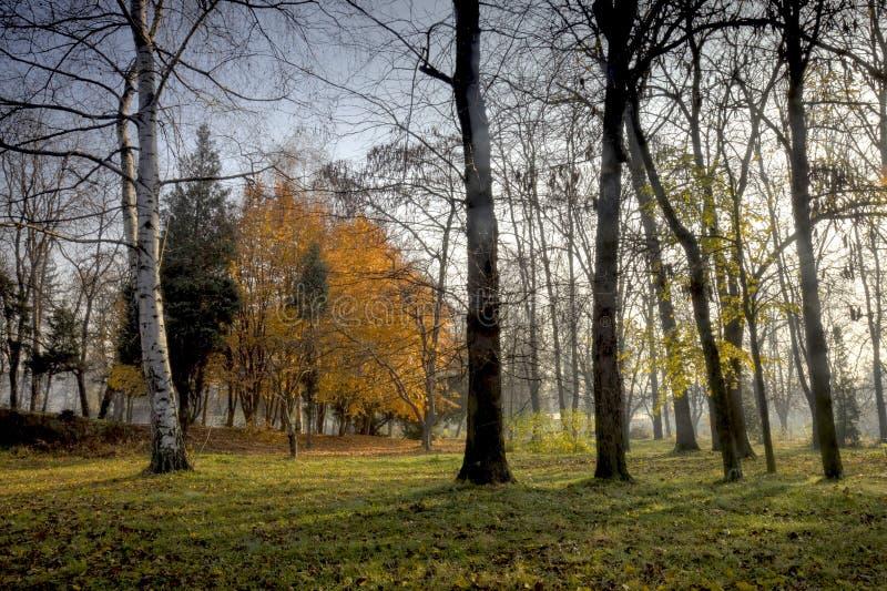 De scène van de herfst royalty-vrije stock fotografie