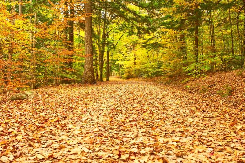 De scène van de herfst de kleurrijke achtergrond royalty-vrije stock afbeeldingen