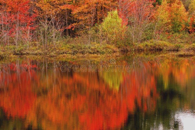 De scène van de herfst die in meer wordt weerspiegeld stock foto's