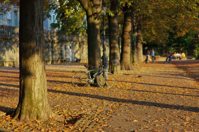De scène van de herfst in stad stock afbeeldingen