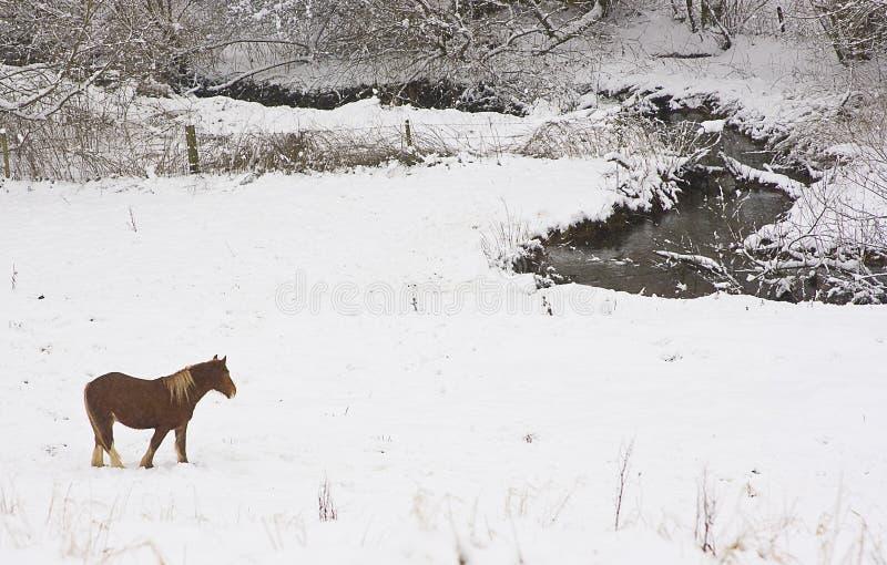 De scène van de sneeuw royalty-vrije stock afbeeldingen