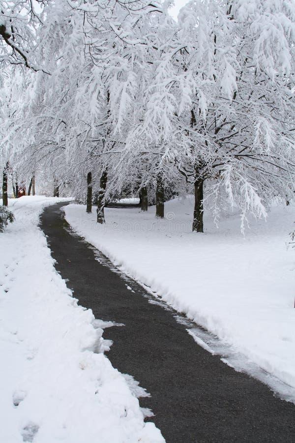 De Scène van de sneeuw royalty-vrije stock foto's