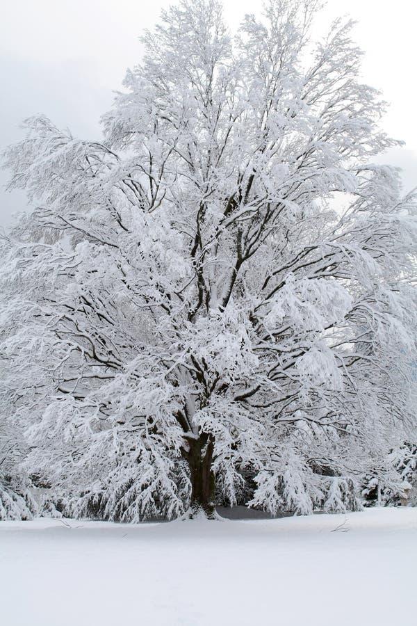 De Scène van de sneeuw stock afbeelding