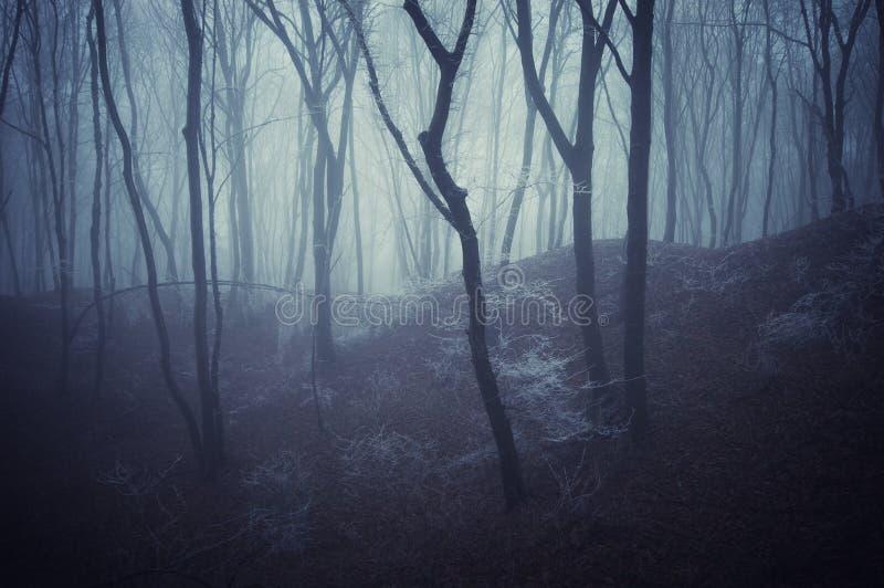 De scène van de verschrikking van een donker bos met blachbomen   stock foto