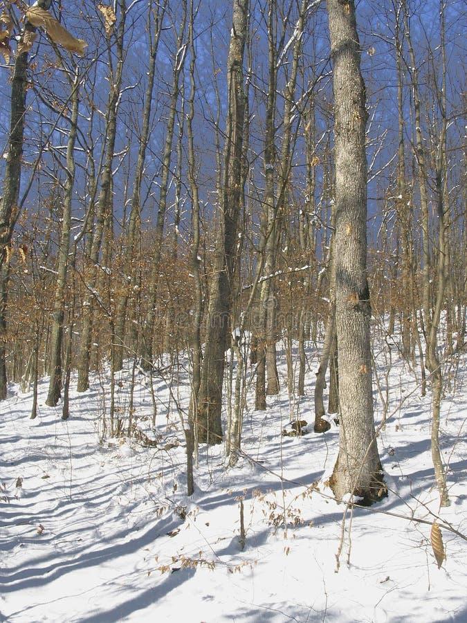 Download De scène van de winter stock foto. Afbeelding bestaande uit bomen - 275762