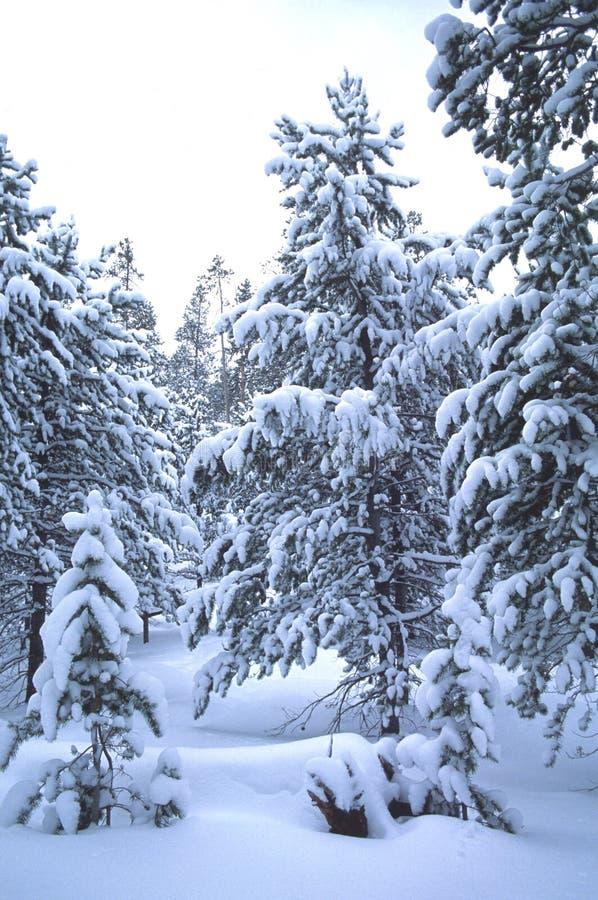 De scène van de winter, Robertson, WY royalty-vrije stock afbeelding