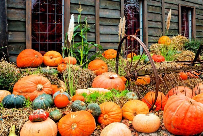 De scène van de de herfstoogst met kleurrijke pompoenen royalty-vrije stock foto's