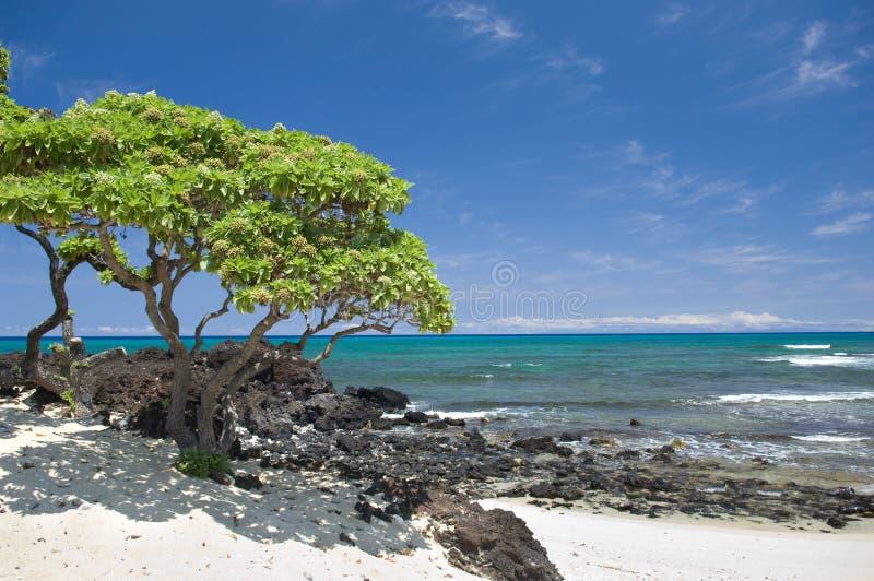 De Scène van het Strand van Hawaï stock afbeeldingen