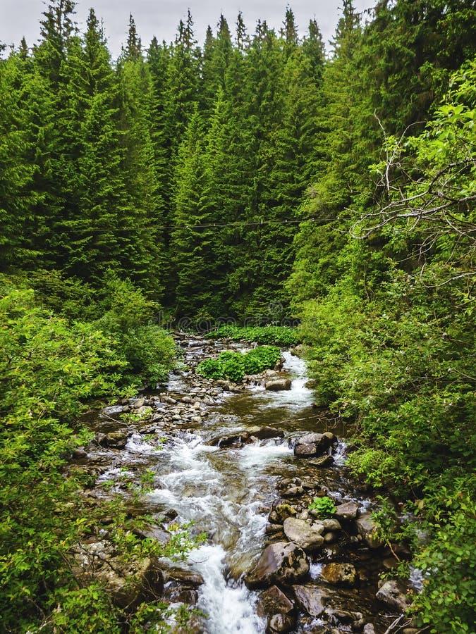 De scène van Nice met bergrivier Prut in groen Karpatisch bos stock fotografie