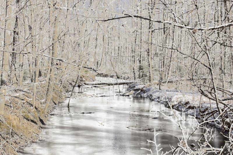De Scène van de Winter in het Park royalty-vrije stock foto