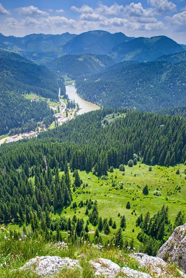 De scène van de de zomerberg in de Roemeense Karpaten stock afbeeldingen