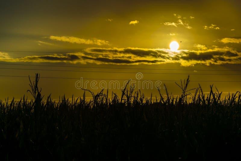 De Scène van de zonsondergangweide, San Jose, Uruguay royalty-vrije stock afbeelding