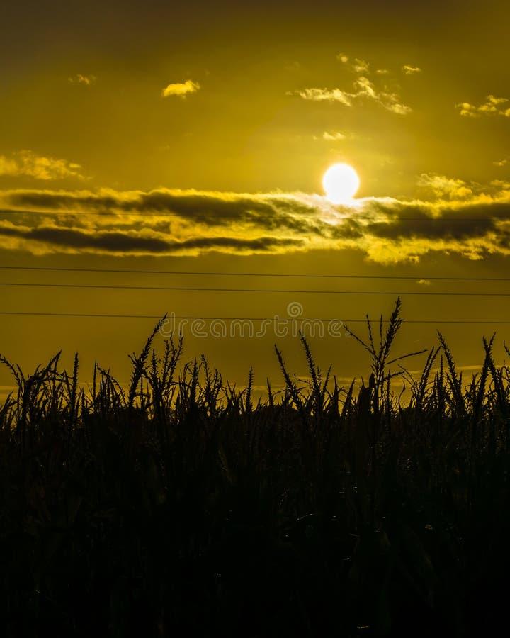 De Scène van de zonsondergangweide, San Jose, Uruguay stock afbeelding