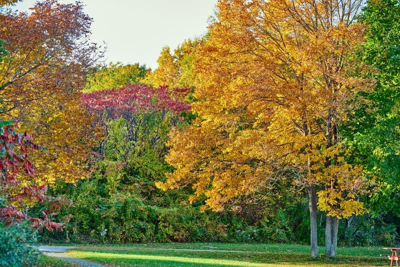 De sc?ne van de herfst de kleurrijke achtergrond royalty-vrije stock foto