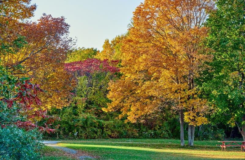 De sc?ne van de herfst de kleurrijke achtergrond royalty-vrije stock fotografie