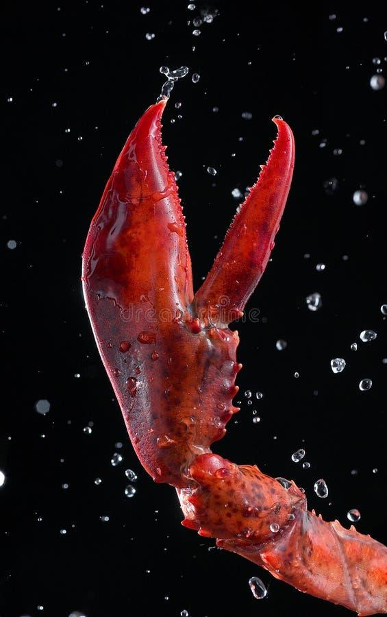 De schaar van de zeekreeft royalty-vrije stock fotografie