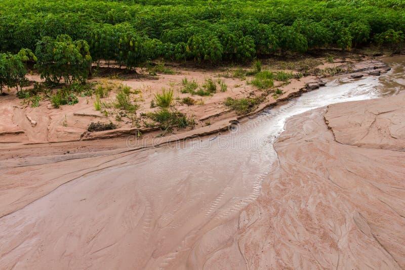 De schade van de maniokgrond stock foto's
