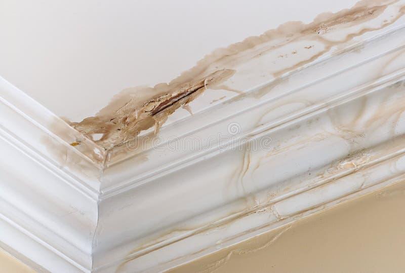 De schade van het plafondwater