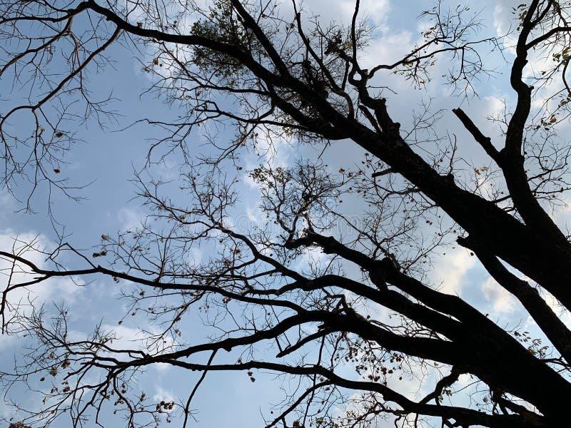 De schaduw die de takken van de grote bomen uitspreiden onder de heldere hemel, abstracte achtergrond, natuurlijk behang stock afbeelding
