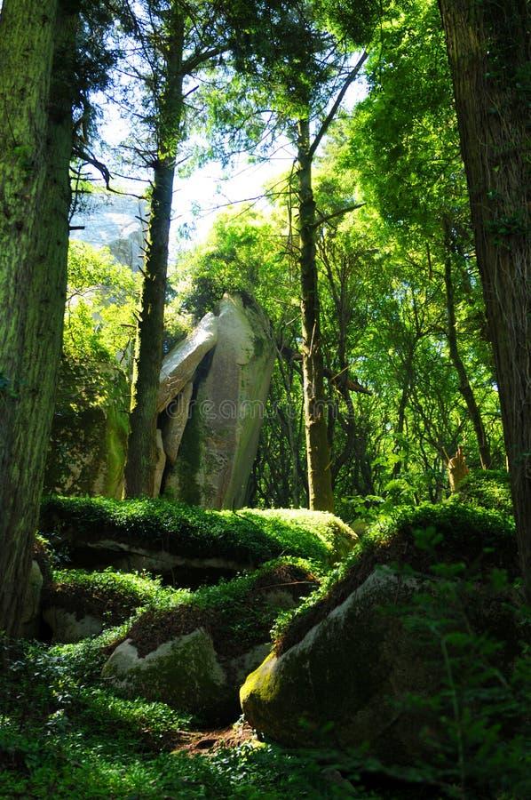 In de schaduw gesteld bos