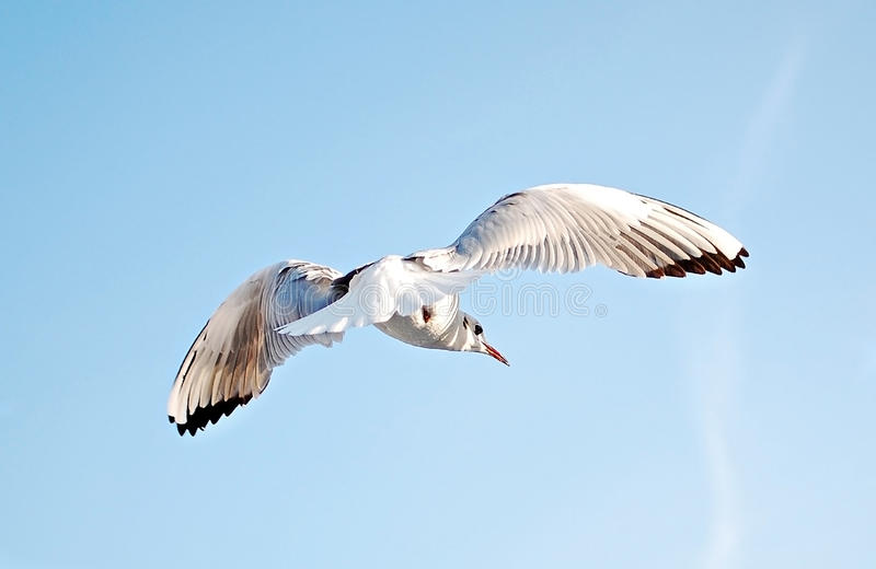 Download De Schaduw van de vleugel stock afbeelding. Afbeelding bestaande uit vrijheid - 21380273