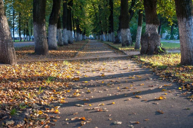 De schaduw van de de herfststeeg en droge gele bladeren stock foto's