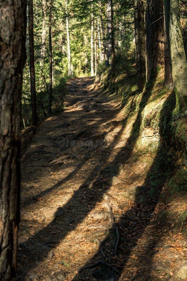 De schaduwen van de bomen op de weg royalty-vrije stock afbeeldingen