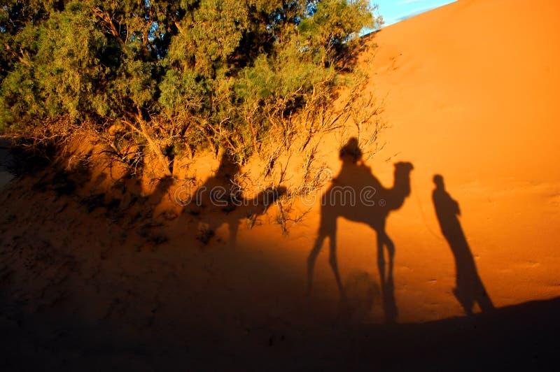 De schaduwen van de kameel in een woestijn stock foto