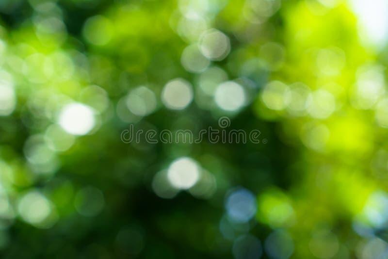 De schaduwen van defocused natuurlijke groene bladeren en het gloeien wit licht royalty-vrije stock fotografie