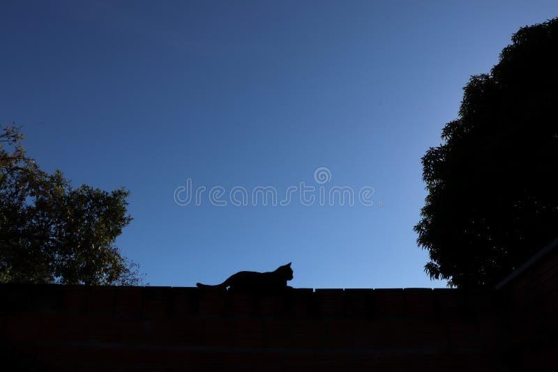 De schaduwen van het kattensilhouet royalty-vrije stock afbeeldingen