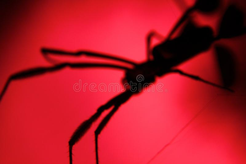De schaduwen van jagen grote spin angst aan royalty-vrije stock afbeelding