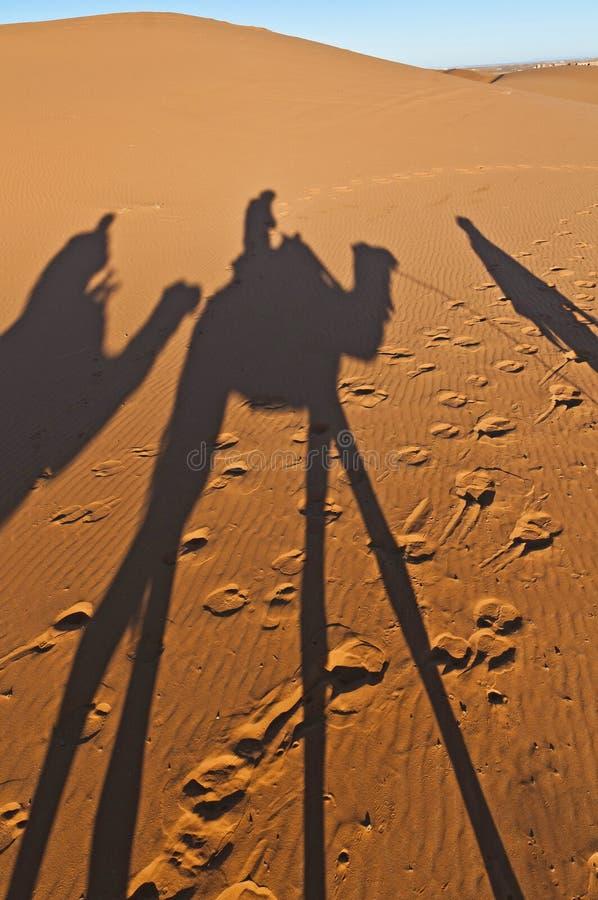 De schaduwen van kamelen meer dan Erg Chebbi in Marokko royalty-vrije stock foto's