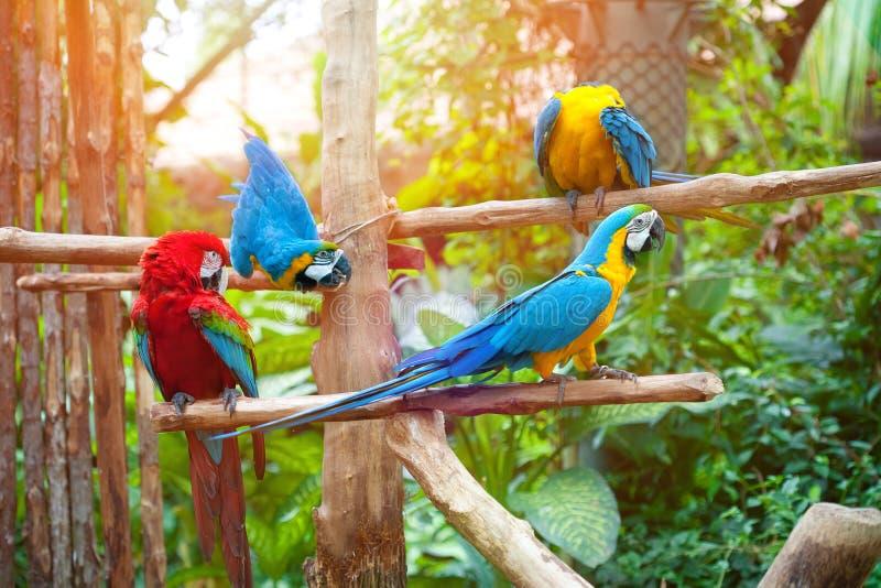 De scharlaken en blauwe ara streek op een houten post neer genietend van de warmte van de avondzon royalty-vrije stock foto's