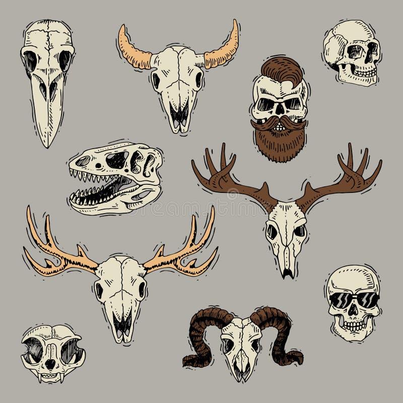 De schedels beenden hoofd van dieren van stierengeit of schapen en menselijke schedel met baard voor het skeletreeks van de heren royalty-vrije illustratie