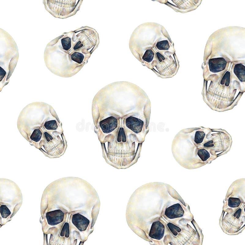 Is de schedels menselijke persoon geïsoleerd op een witte achtergrond De tekening van de waterverf stock illustratie