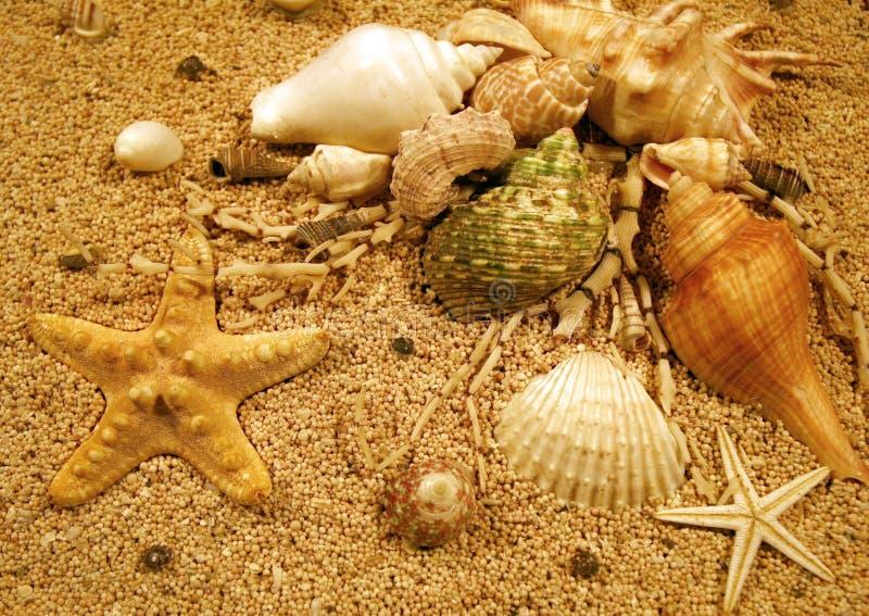De Schepselen van het strand stock afbeelding