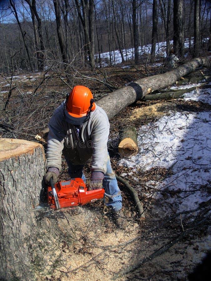 De scherpe bomen van de houthakker stock foto