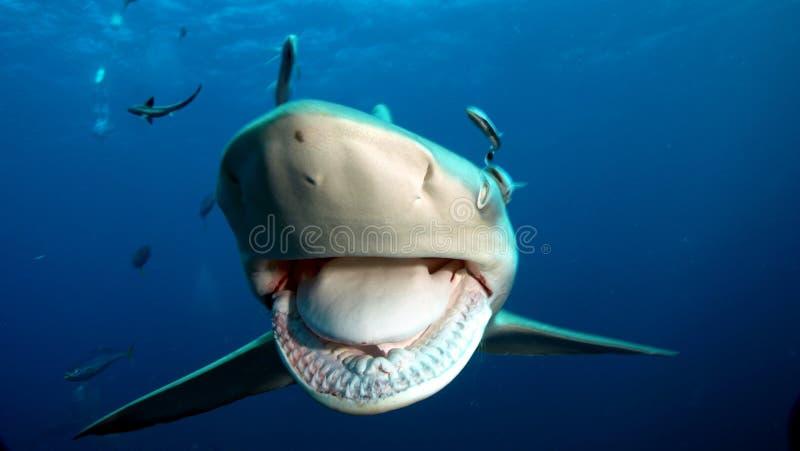 De scherpe tanden van de haai stock afbeeldingen