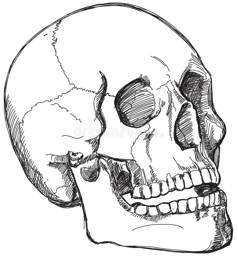 De schets van de schedel royalty-vrije illustratie