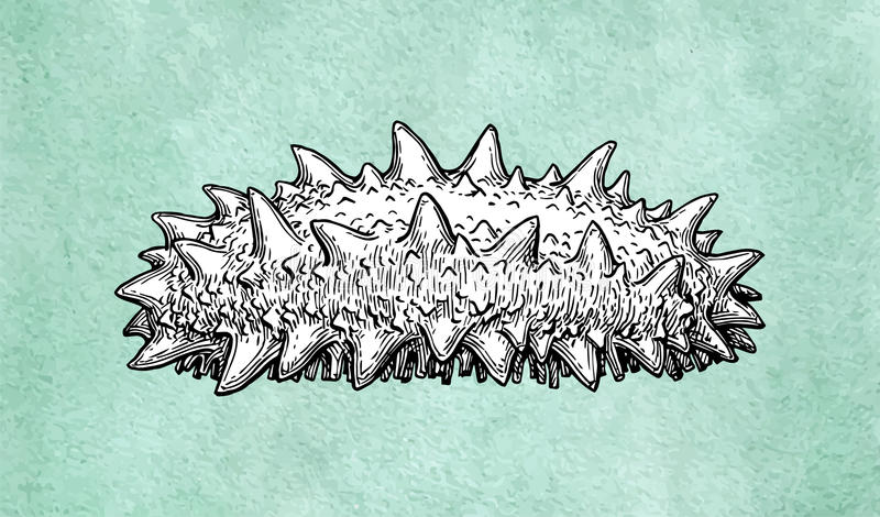 De schets van de Trepanginkt royalty-vrije illustratie