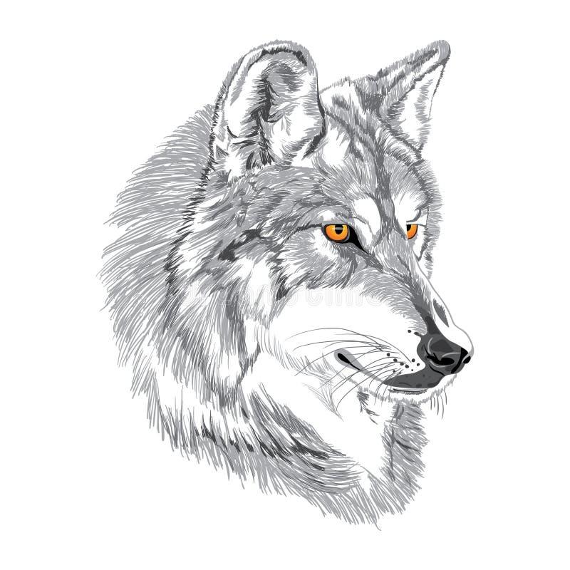 De schets van de wolfssnuit royalty-vrije stock fotografie