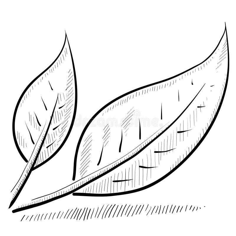 De schets van het blad of van de aard