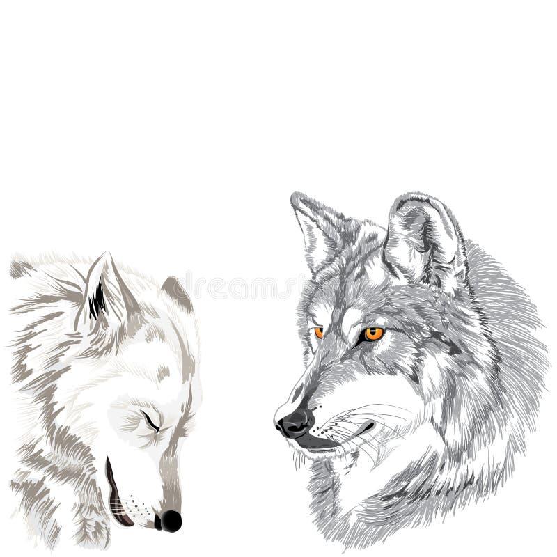 De schets van wolvensnuiten royalty-vrije stock foto's