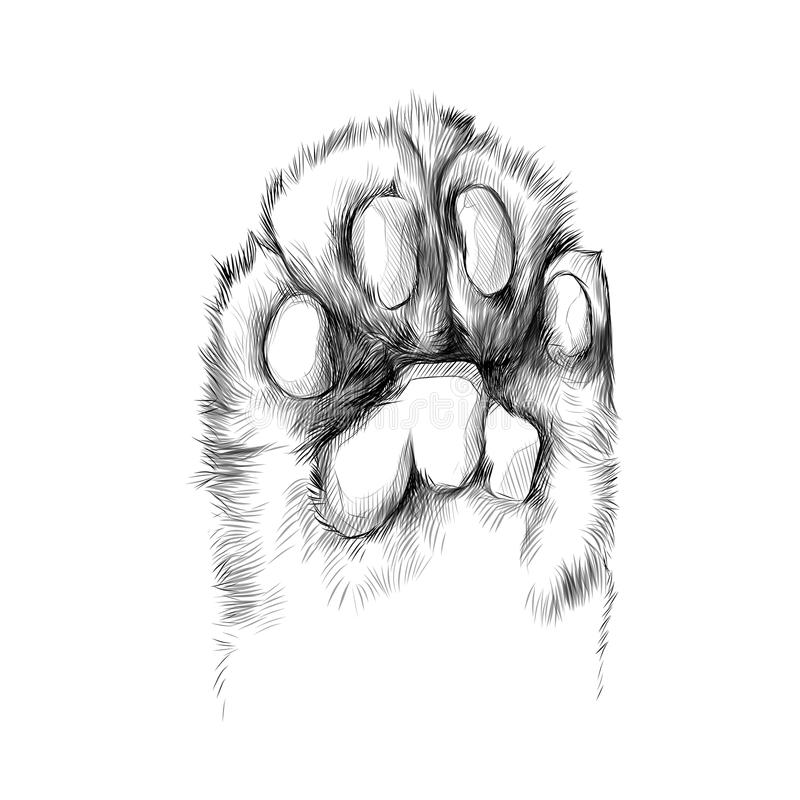 De schets vectorgrafiek van de katten` s poot royalty-vrije illustratie