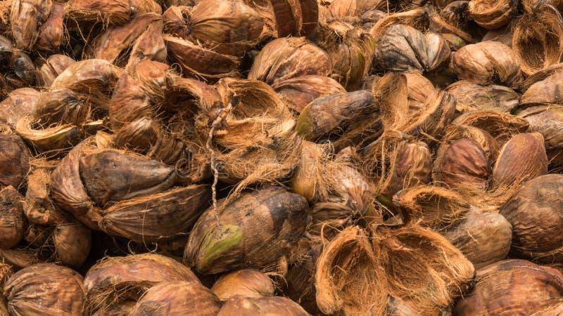 De schil van het kokosnotencoir stapelde zich op, wat weg is gepeld of van de kokosnoot de-husked sluit omhoog geschoten van koko stock fotografie