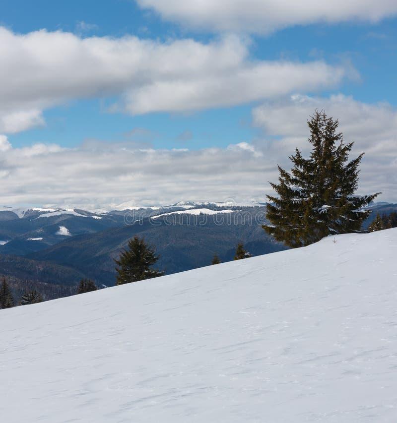 De schilderachtige Karpatische mening van de de winter zonnige dag van Skupova-berghelling, de Oekraïne  stock afbeeldingen