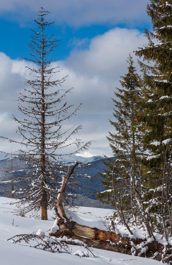De schilderachtige mening van de de winterberg van Skupova-berghelling met sommige vernietigde windschermbomen  stock afbeeldingen
