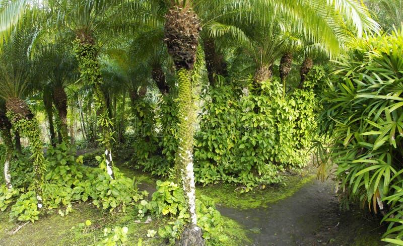 De schilderachtige tuin van Woninganse Latouche in Martinique stock afbeelding