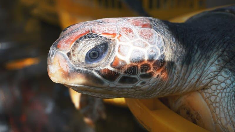 De schildpad in een mand ter plaatse royalty-vrije stock foto