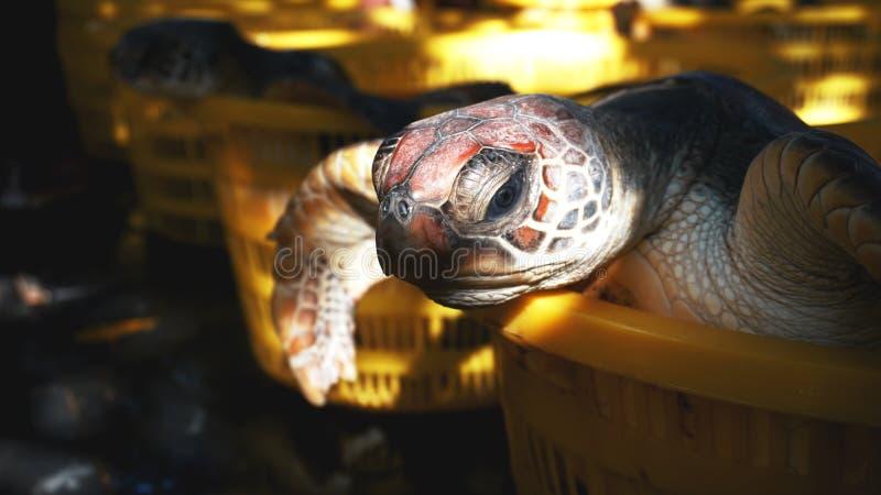De schildpad in een mand ter plaatse royalty-vrije stock foto's